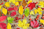 Осенний натюрморт с мокрыми листьями и ягодами, фото № 12954354, снято 25 октября 2015 г. (c) Станислав Самойлик / Фотобанк Лори