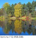 Купить «Осенний пейзаж с деревьями, отражающимися в воде», фото № 12958046, снято 21 октября 2015 г. (c) Михаил Марковский / Фотобанк Лори