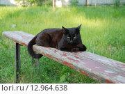 Кошка на лавочке. Стоковое фото, фотограф Надеждин Александр / Фотобанк Лори