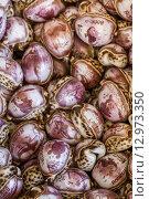 Купить «Gifts from Exotic Seashell and Cockleshell Piled Together», фото № 12973350, снято 27 марта 2019 г. (c) PantherMedia / Фотобанк Лори