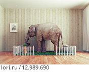 Купить «Домашнее животное слон», фото № 12989690, снято 19 февраля 2019 г. (c) Виктор Застольский / Фотобанк Лори