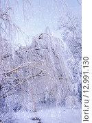 Купить «Вид снизу на ветви ивы, покрытые льдом и инеем», фото № 12991130, снято 25 декабря 2011 г. (c) Олеся Новицкая / Фотобанк Лори