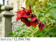 Цветущее растение в Воронцовском парке Алупки (2015 год). Стоковое фото, фотограф Юрий Винокуров / Фотобанк Лори