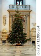 Большая елка, украшенная новогодними гирляндами. Стоковое фото, фотограф Елена Антипина / Фотобанк Лори