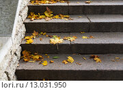 Купить «close up of fallen maple leaves on stone stairs», фото № 13031950, снято 9 октября 2015 г. (c) Syda Productions / Фотобанк Лори