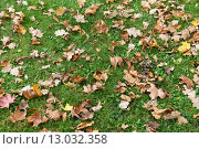 Купить «close up of fallen maple leaves on grass», фото № 13032358, снято 9 октября 2015 г. (c) Syda Productions / Фотобанк Лори