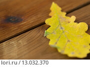 Купить «close up of yellow oak tree autumn leaf on wood», фото № 13032370, снято 19 октября 2015 г. (c) Syda Productions / Фотобанк Лори