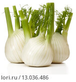 Купить «Fresh fennel bulb isolated on white background close up», фото № 13036486, снято 9 февраля 2015 г. (c) Natalja Stotika / Фотобанк Лори