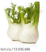 Купить «Fresh fennel bulb isolated on white background close up», фото № 13036686, снято 9 февраля 2015 г. (c) Natalja Stotika / Фотобанк Лори