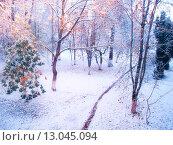 Купить «Холодное утро в  зимнем лесу», фото № 13045094, снято 26 октября 2012 г. (c) Зезелина Марина / Фотобанк Лори