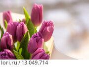 Тюльпаны. Стоковое фото, фотограф Свистунова Татьяна / Фотобанк Лори