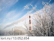Купить «Труба котельной среди заснеженных деревьев», фото № 13052654, снято 12 ноября 2015 г. (c) Алексей Маринченко / Фотобанк Лори