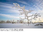 Купить «Красивая ветка в инее», фото № 13052658, снято 12 ноября 2015 г. (c) Алексей Маринченко / Фотобанк Лори