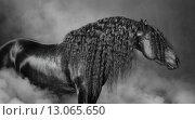 Купить «Портрет черной лошади с длинной гривой в дыму», фото № 13065650, снято 14 октября 2015 г. (c) Абрамова Ксения / Фотобанк Лори