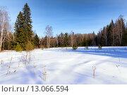 Купить «Зимний лес с заснеженными деревьями на фоне голубого неба», фото № 13066594, снято 1 марта 2015 г. (c) Евгений Ткачёв / Фотобанк Лори