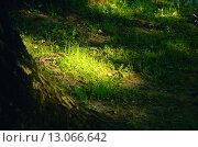 Солнечный луч на траве. Стоковое фото, фотограф Людмила Герасимова / Фотобанк Лори