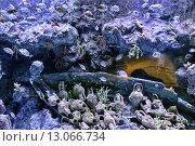 Рыбы плавают вокруг затонувшего судна с амфорами. Стоковое фото, фотограф Евгений Ткачёв / Фотобанк Лори