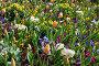 Spring flowers background, фото № 13072006, снято 23 марта 2014 г. (c) Юрий Брыкайло / Фотобанк Лори