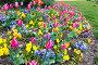 Spring flowers background, фото № 13072018, снято 23 марта 2014 г. (c) Юрий Брыкайло / Фотобанк Лори