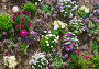 Blossoming varicolored flowerbed., фото № 13072074, снято 24 марта 2014 г. (c) Юрий Брыкайло / Фотобанк Лори