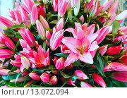 Купить «Amaryllis flowers bouquet», фото № 13072094, снято 24 марта 2014 г. (c) Юрий Брыкайло / Фотобанк Лори