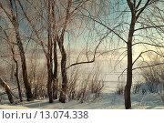 Купить «Зимний пейзаж в лесу», фото № 13074338, снято 4 апреля 2020 г. (c) Зезелина Марина / Фотобанк Лори