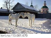 Лошади на старой усадьбе. Стоковое фото, фотограф Елена Овчаренко / Фотобанк Лори