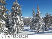 Купить «Зимний лес, ели в снегу Таганай, гора Круглица», фото № 13083286, снято 10 марта 2013 г. (c) Юрий Карачев / Фотобанк Лори