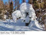 Купить «Снежные скульптуры, зимний лес, Таганай», фото № 13083298, снято 10 марта 2013 г. (c) Юрий Карачев / Фотобанк Лори