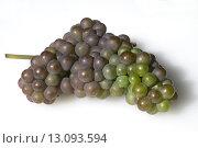 Купить «Grauburgunder, Pinot, gris, grigio, Rulaender,», фото № 13093594, снято 24 мая 2018 г. (c) PantherMedia / Фотобанк Лори