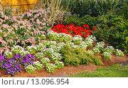 Купить «Blossoming varicolored flowerbed», фото № 13096954, снято 28 марта 2014 г. (c) Юрий Брыкайло / Фотобанк Лори