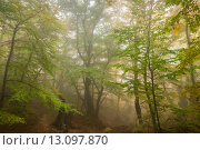 Купить «Туманный осенний лес. Демерджи. Крым», фото № 13097870, снято 22 октября 2015 г. (c) Оксана Гильман / Фотобанк Лори