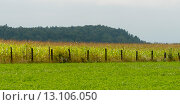 Купить «Farmland in Plaisance, Quebec, Canada», фото № 13106050, снято 2 сентября 2013 г. (c) Ingram Publishing / Фотобанк Лори