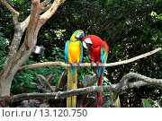 Попугаи сидят на ветке дерева. Стоковое фото, фотограф Nelly Gogus / Фотобанк Лори