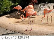 Фламинго в парке. Стоковое фото, фотограф Nelly Gogus / Фотобанк Лори