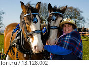 Купить «Jane Harkness with two Clydesdale horses», фото № 13128002, снято 20 января 2019 г. (c) age Fotostock / Фотобанк Лори
