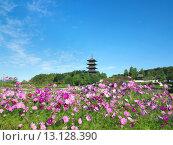 Купить «Bitchu Kokubunji Temple, Tower, Cosmos, Flower, Soja, Okayama, Japan, Sanyo», фото № 13128390, снято 25 октября 2006 г. (c) age Fotostock / Фотобанк Лори