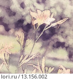 Купить «art floral vintage sepia watercolor background with light coral lilies», фото № 13156002, снято 1 июля 2013 г. (c) Ingram Publishing / Фотобанк Лори