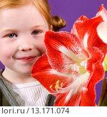 Купить «Hippeastrum Minerva», фото № 13171074, снято 2 января 2007 г. (c) age Fotostock / Фотобанк Лори
