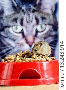 Cat and mouse. Редакционное фото, фотограф David Aubrey / age Fotostock / Фотобанк Лори