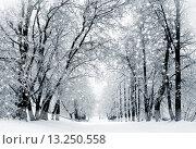 Купить «Winter scenery, snowstorm in park», фото № 13250558, снято 3 декабря 2012 г. (c) ElenArt / Фотобанк Лори