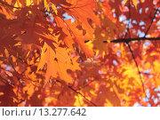 Купить «Осень золотая», эксклюзивное фото № 13277642, снято 5 ноября 2015 г. (c) Ирина Водяник / Фотобанк Лори
