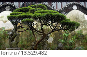 Купить «Art of Chinese garden design, Yu Gardens in Sahnghai», фото № 13529482, снято 16 сентября 2007 г. (c) age Fotostock / Фотобанк Лори