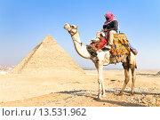 Купить «Верблюд в пирамиды Гиза, Каир, Египет», фото № 13531962, снято 6 мая 2013 г. (c) Matej Kastelic / Фотобанк Лори