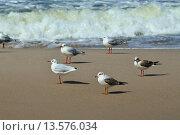 Купить «Чайки и морской прибой», фото № 13576034, снято 20 августа 2014 г. (c) Сергей Трофименко / Фотобанк Лори