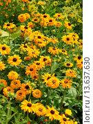 Купить «blühende Pflanzen», фото № 13637630, снято 7 июля 2020 г. (c) age Fotostock / Фотобанк Лори