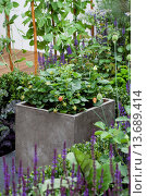 Купить «HAMPTON COURT FLOWER SHOW. 'THE POTENTIAL FEAST' GARDEN BY RAINE CLARKE-WILLS & FIONA GODMAN-DORINGTON», фото № 13689414, снято 19 сентября 2019 г. (c) age Fotostock / Фотобанк Лори