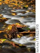 Купить «Silver Creek in autumn, Silver Falls State Park, Oregon.», фото № 13822910, снято 3 ноября 2008 г. (c) age Fotostock / Фотобанк Лори