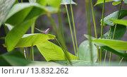 Купить «butterfly alights on a leaf in Suan Rot Fai Park, Bangkok, Thailand.», фото № 13832262, снято 24 августа 2019 г. (c) age Fotostock / Фотобанк Лори