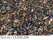 Купить «Фон из яркой разноцветной гальки», фото № 13836294, снято 19 августа 2015 г. (c) Мальцев Артур / Фотобанк Лори